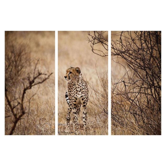 Aluminiumbild Gepard 3 teilig Hochformat Bilder