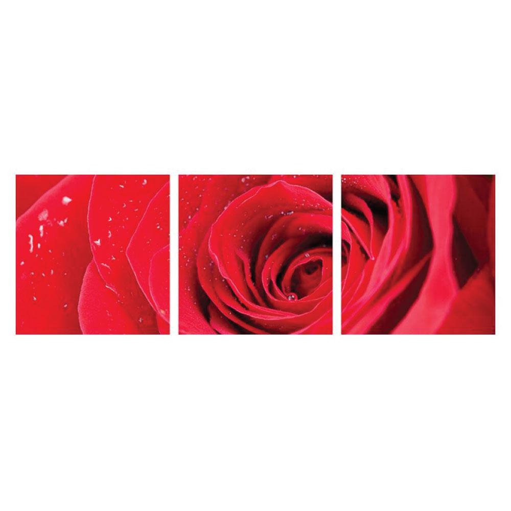 Leinwandbild Rose Rot 3 teilig Panorama quadratisch Bilder