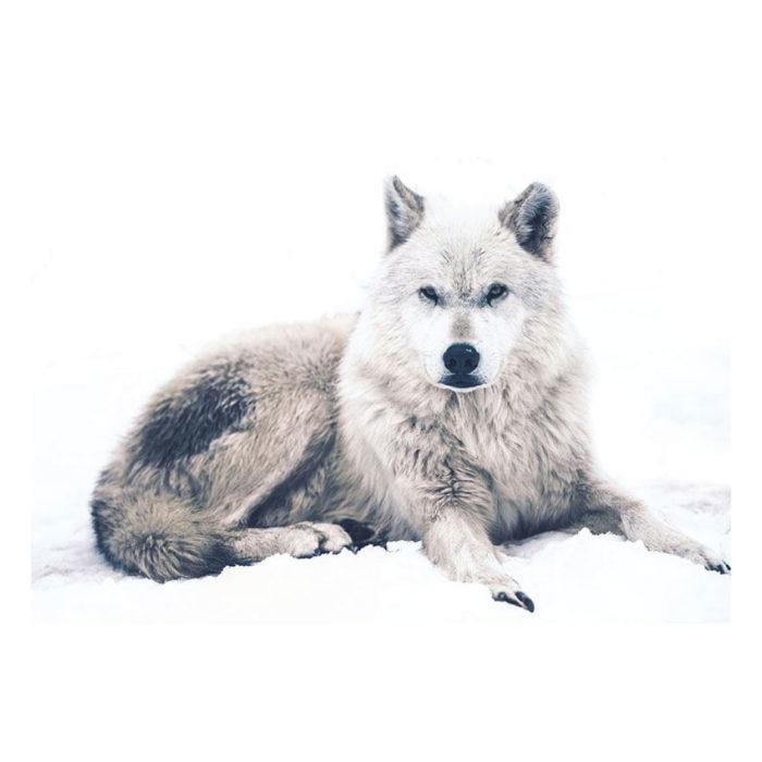 Metallic Bild Der Wolf im Schnee im Querformat