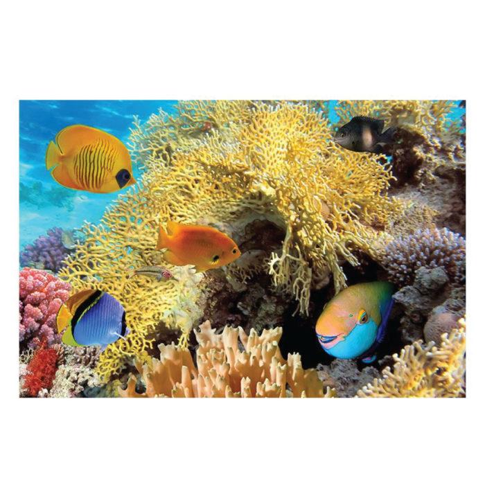 Poster Fisch Fische Unterwasser Motiv im Querformat