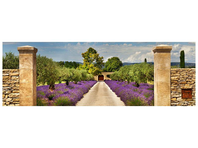 Leinwandbild Panorama Lavendel Garten Querformat